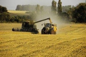 استقرار لأسعار المنتجات الزراعية وفقا لتقرير منظمة الأغذية والزراعة ومنظمة التعاون والتنمية