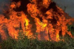 البنك المركزي الكندي: حرائق الغابات في ألبرتا أضرت باقتصاد البلاد