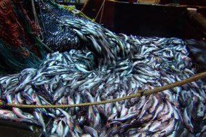 الأمم المتحدة تحذر من الصيد الجائر للأسماك خشية الانقراض