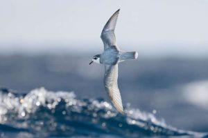 العلماء يكتشفو سبب أكل الطيور البحرية للكثير من للبلاستيك