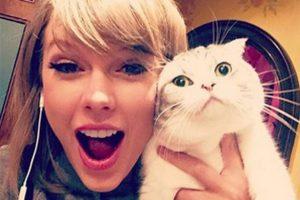 دريك يجلب الهدايا لسويفت وقططها